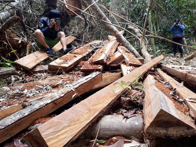 Cận cảnh rừng lim xanh bị lâm tặc xẻ thịt - Ảnh 9.