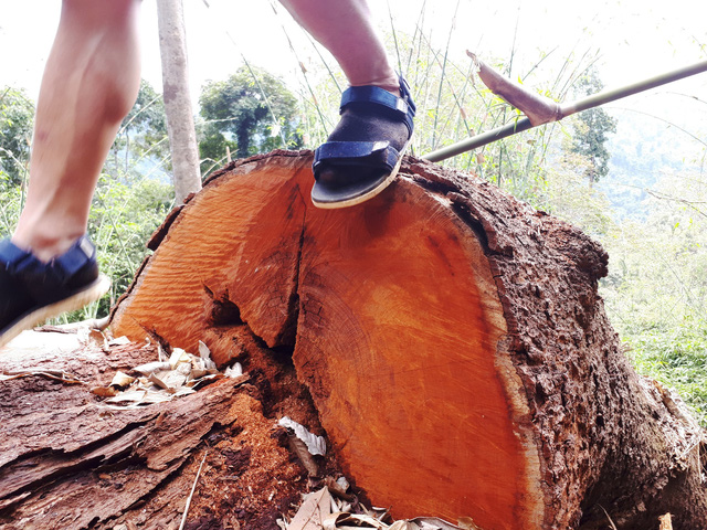 Cận cảnh rừng lim xanh bị lâm tặc xẻ thịt - Ảnh 11.
