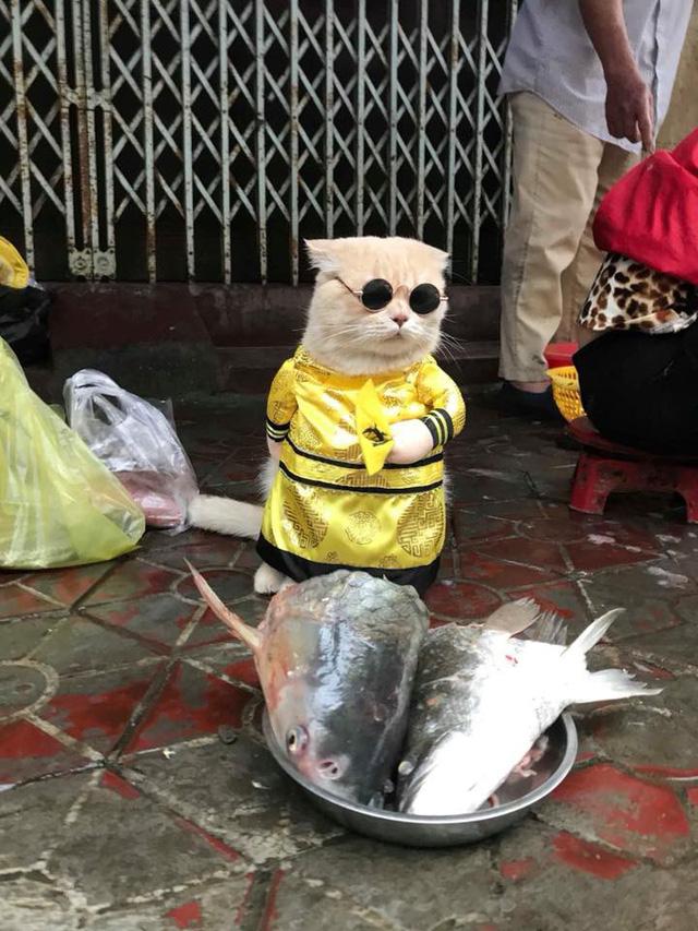 Chú mèo bán cá tên Chó ở Hải Phòng gây chú ý trên mạng xã hội - Ảnh 1.