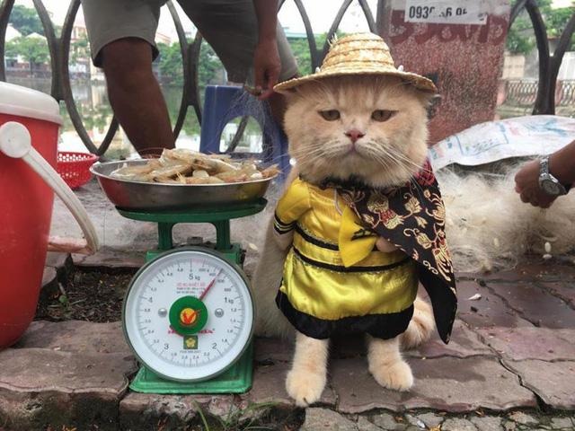Chú mèo bán cá tên Chó ở Hải Phòng gây chú ý trên mạng xã hội - Ảnh 2.