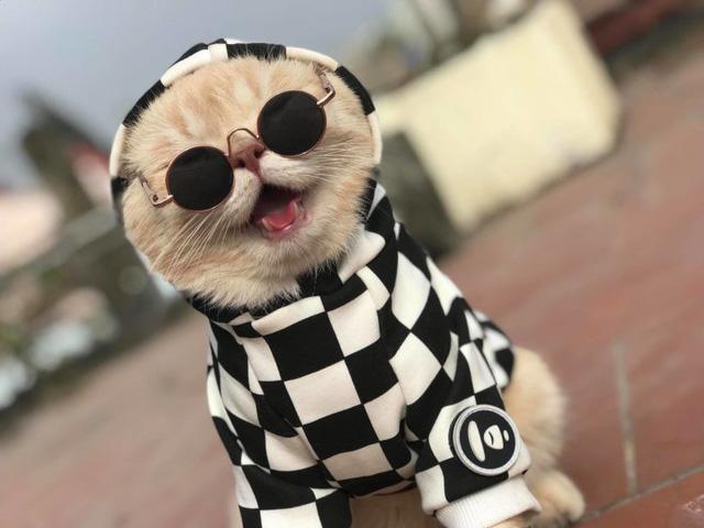 Chú mèo bán cá tên Chó ở Hải Phòng gây chú ý trên mạng xã hội - Ảnh 3.