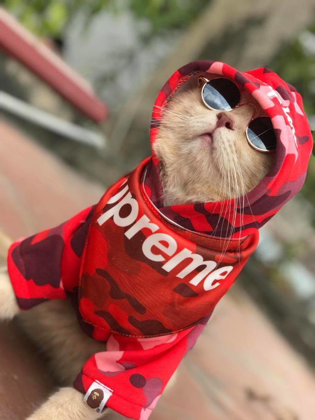 Chú mèo bán cá tên Chó ở Hải Phòng gây chú ý trên mạng xã hội - Ảnh 4.