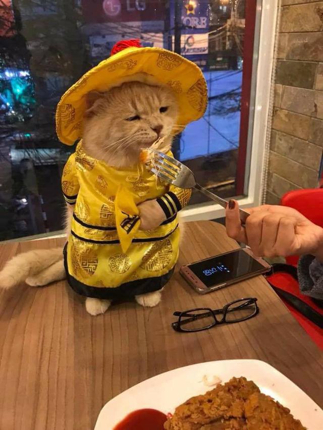 Chú mèo bán cá tên Chó ở Hải Phòng gây chú ý trên mạng xã hội - Ảnh 5.