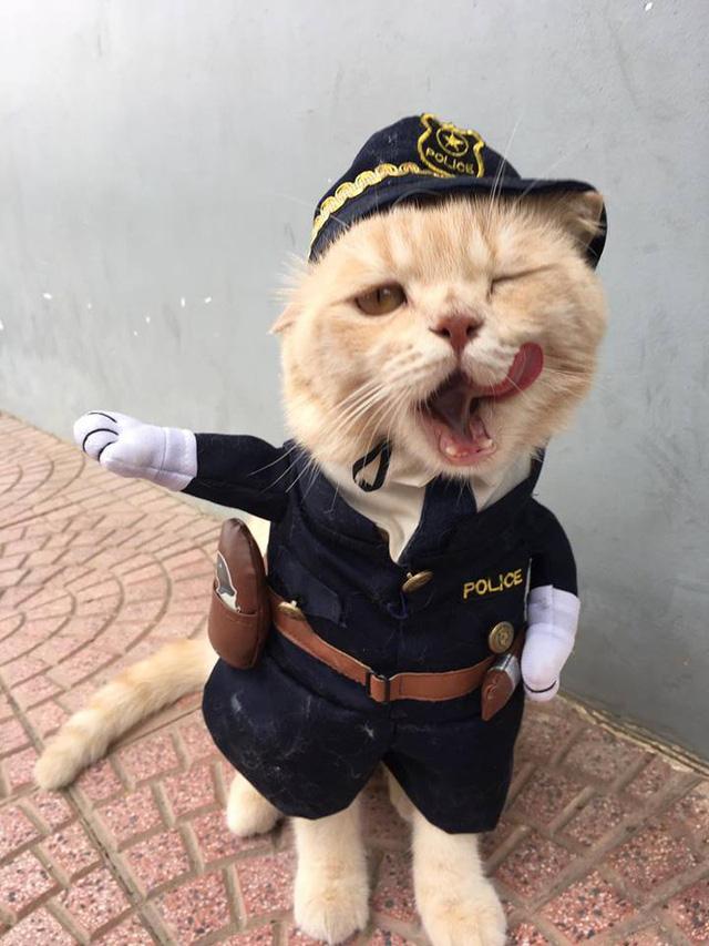 Chú mèo bán cá tên Chó ở Hải Phòng gây chú ý trên mạng xã hội - Ảnh 6.