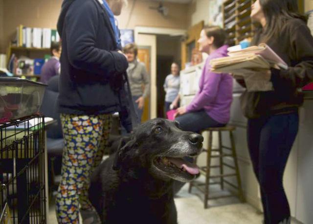Gia đình vỡ òa sung sướng khi tìm thấy chó lạc 10 năm - Ảnh 5.