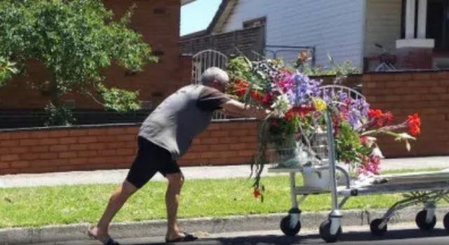 Bố mẹ Úc uất ức vì cây con gái trồng bị trộm - Ảnh 3.