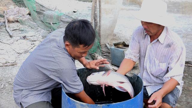Nông dân miền Tây trúng đậm nhờ lén lút nuôi cá hô - Ảnh 1.