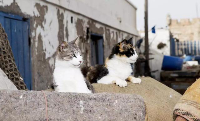 Lãnh thổ của những chú mèo hạnh phúc nhất thế giới - Ảnh 1.
