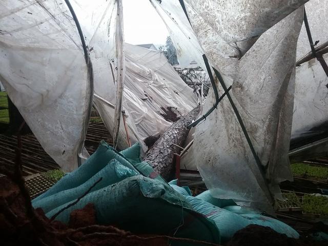 Lốc xoáy ở Đà Lạt làm sập nhiều nhà dân, cây đổ ngã hàng loạt