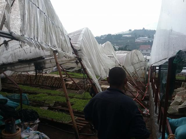 Đà Lạt: lốc xoáy làm sập nhiều nhà dân - Ảnh 2.