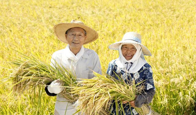 Người Nhật dùng dầu gạo để bảo vệ sức khỏe tim mạch - Ảnh 1.