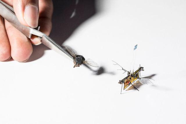 Chế tạo thành công ruồi robot theo dõi cây trồng - Ảnh 1.