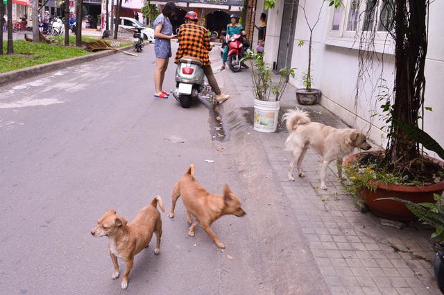 Bất ngờ khi người Nhật quy hoạch cả tiếng chó sủa ở chung cư - Ảnh 1.