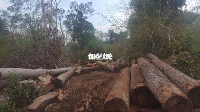 Một tháng 200 vụ phá rừng, 'điểm nóng' ở Đắk Nông, Điện Biên - Ảnh 1.
