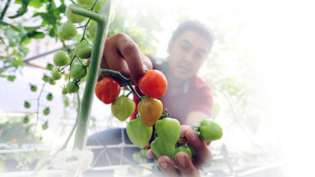 Người Sài Gòn đến Đà Lạt ngửi đất mua rau - Ảnh 1.