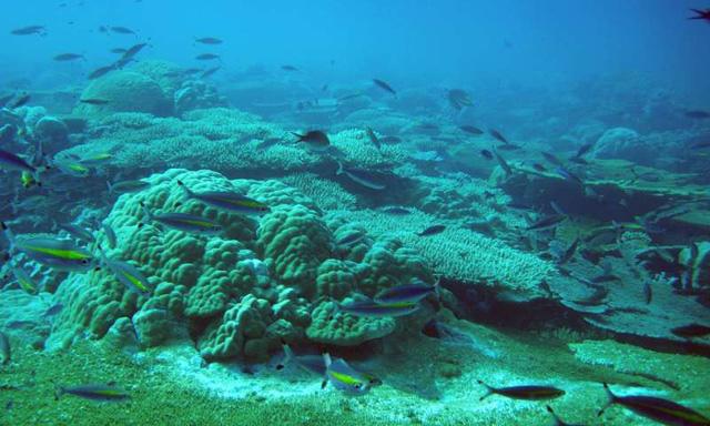 Việt Nam đối mặt bão, lũ chưa từng có nếu mất rạn san hô - Ảnh 1.