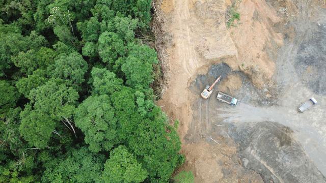 Mỗi phút thế giới mất đi diện tích rừng tương đương 40 sân bóng đá - Ảnh 1.
