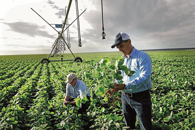 Bayer hoàn tất thương vụ sáp nhập lịch sử trong ngành nông nghiệp toàn cầu - Ảnh 1.