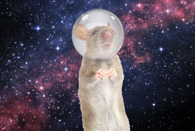 Mỹ đưa 20 chú chuột lên Trạm không gian quốc tế - Ảnh 2.