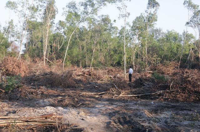 Phát hiện hàng chục vụ phá rừng nhưng... không lấy gỗ ở Phú Quốc - Ảnh 1.