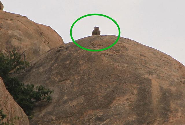 Khỉ xuống núi phá giàn nho, tấn công phụ nữ - Ảnh 1.