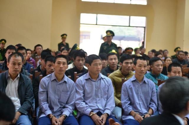 Xét xử 21 bị cáo trong vụ phá rừng pơ mu ở Quảng Nam - Ảnh 2.