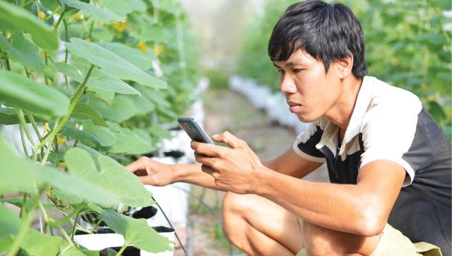 Trồng dưa lưới công nghệ cao nơi cù lao