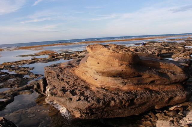 Phát hiện hóa thạch san hô độc nhất vô nhị ở Lý Sơn - Ảnh 1.