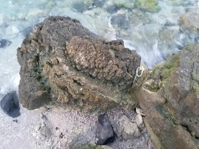 Phát hiện hóa thạch san hô độc nhất vô nhị ở Lý Sơn - Ảnh 2.