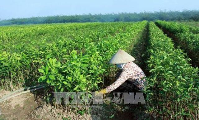 Tạo lập cơ chế tích tụ, tập trung ruộng đất cho sản xuất quy mô - Ảnh 1.