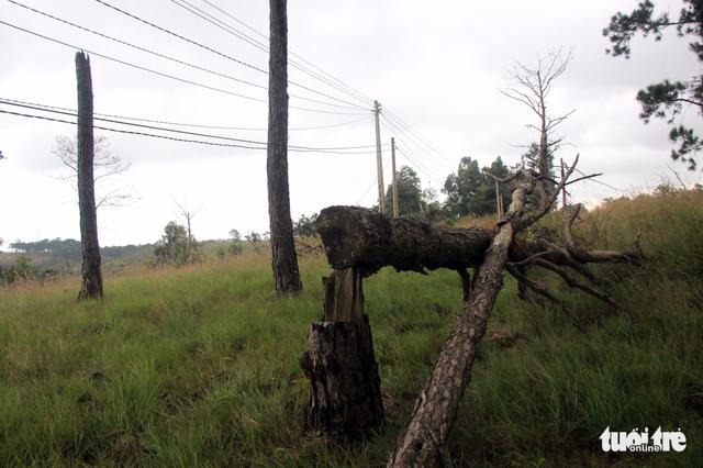 Hơn 50% cán bộ, đảng viên huyện Ea Súp sử dụng 2.000ha đất rừng - Ảnh 1.