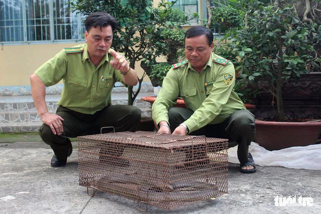Mua rắn làm mồi nhậu, phát hiện hổ mang chúa nên giao kiểm lâm thả về rừng - Ảnh 1.