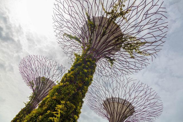 Khu rừng nhân tạo gây tranh cãi ở Singapore - Ảnh 4.