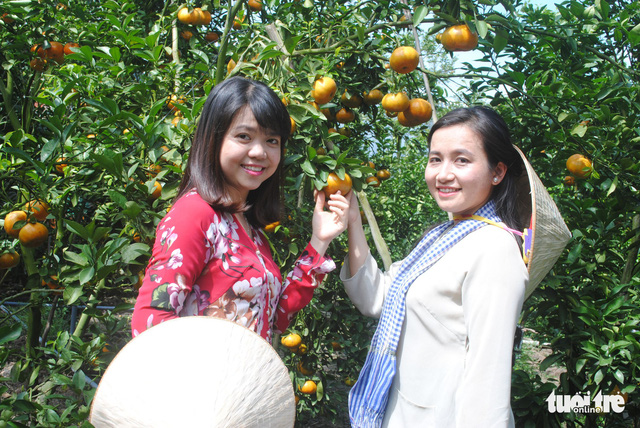 Quýt hồng Lai Vung vào vụ chín, thu hút khách tham quan - Ảnh 5.