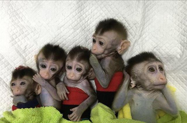 Trung Quốc nhân bản khỉ chỉnh sửa gen - Ảnh 1.