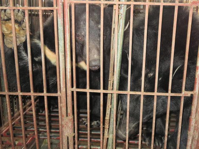 Khóa học thạc sĩ đầu tiên chống buôn bán động vật hoang dã - Ảnh 2.