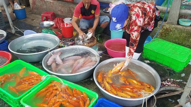 Cá chép Trung Quốc được mùa dịp cúng ông Công, ông Táo - Ảnh 1.