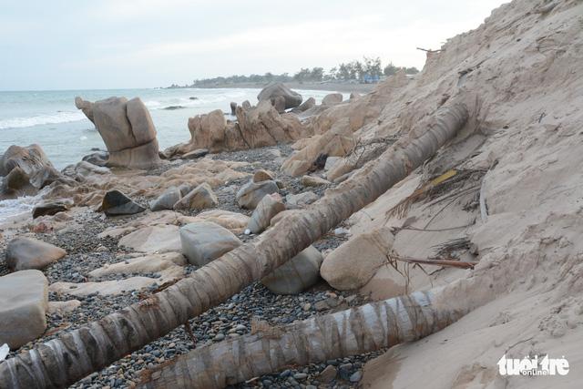 Nghiên cứu hồ sơ sai phạm, chuyển cơ quan điều tra vụ san ủi bãi đá 7 màu - Ảnh 1.