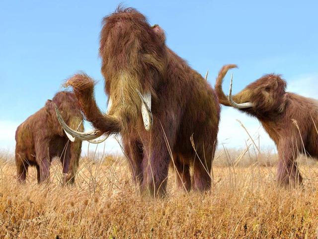 Bất ngờ tìm thấy ADN voi mamút ở Campuchia
