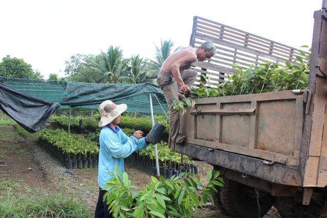 Cảnh báo nông dân không trồng giống sầu riêng lạ - Ảnh 2.