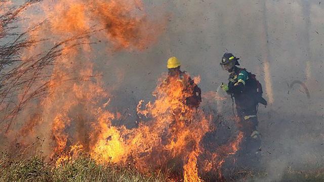 Tìm ra phương pháp phòng chống cháy rừng thân thiện với môi trường - Ảnh 1.