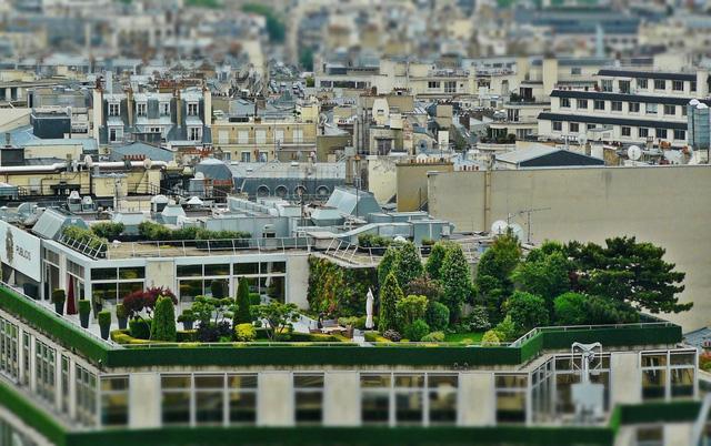 Ai Cập: Phủ xanh các tòa nhà để cải thiện chất lượng không khí - Ảnh 1.