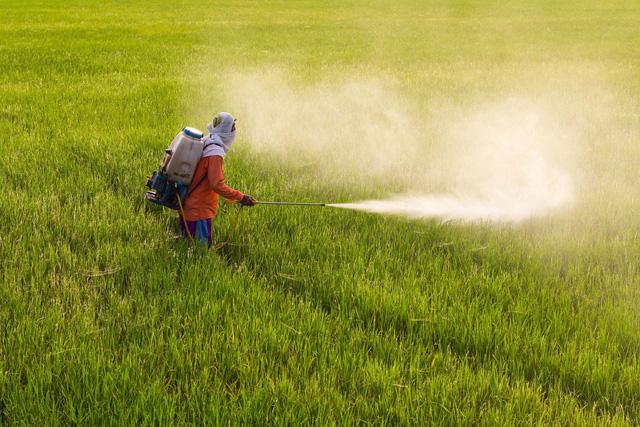 Thái Lan cấm 3 loại hóa chất độc hại trong sản xuất nông nghiệp - Ảnh 1.