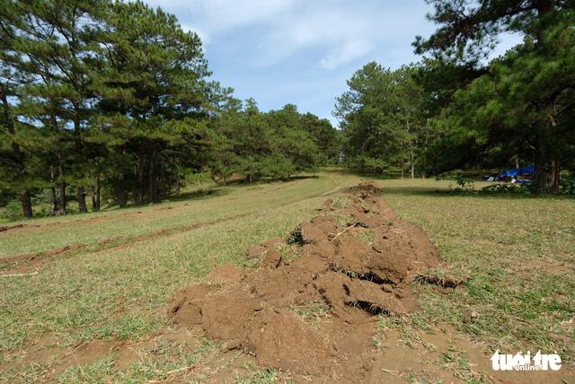Mang máy cày xới tung khu vực cây thông cô đơn để chiếm đất - Ảnh 7.