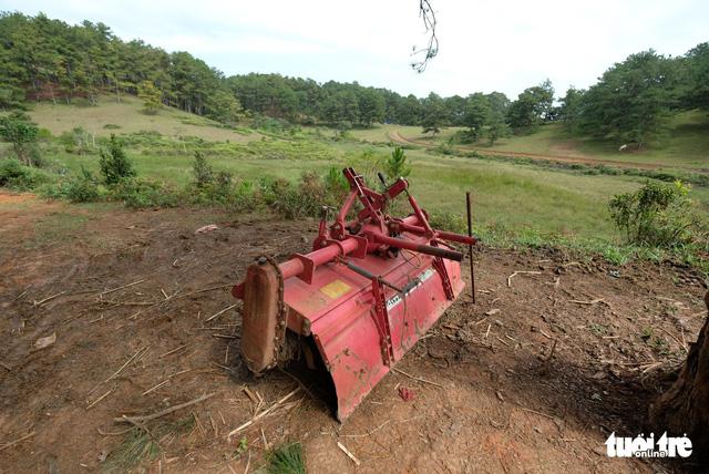 Mang máy cày xới tung khu vực cây thông cô đơn để chiếm đất - Ảnh 6.