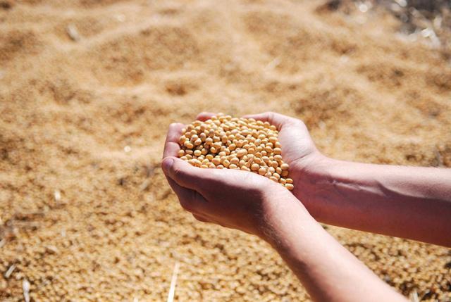 Sản xuất màng bọc thực phẩm từ đậu tương - Ảnh 1.