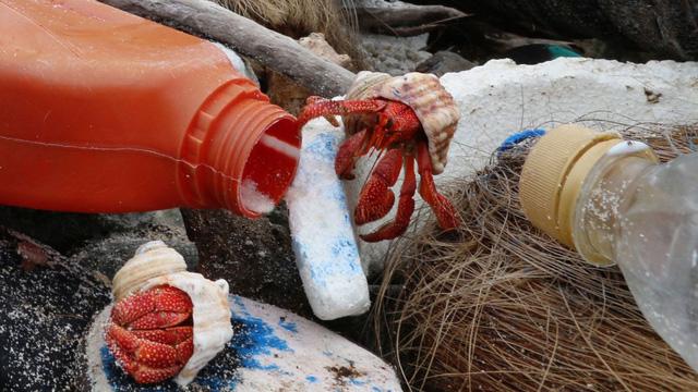 Hàng nghìn con cua ẩn sĩ chết vì bị mắc kẹt trong chai nhựa - Ảnh 1.