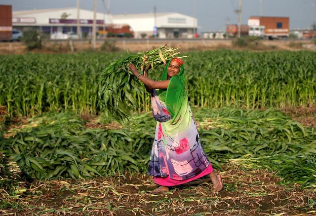 Tất cả nông dân Ấn được hỗ trợ tiền mặt - Ảnh 1.