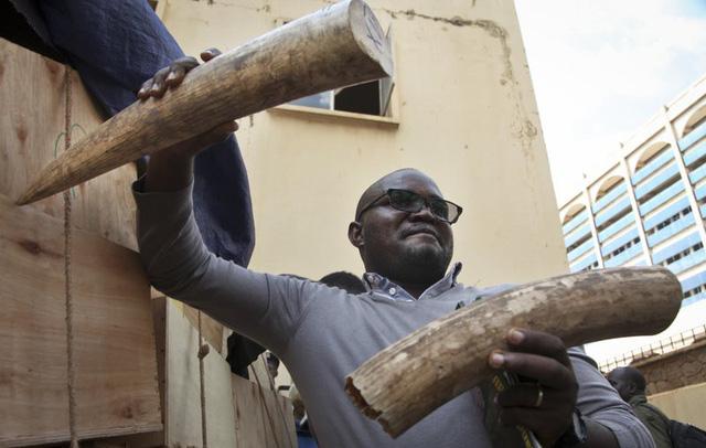Uganda bắt hai người Việt buôn lậu ngà voi trị giá hơn 2 triệu đô - Ảnh 2.
