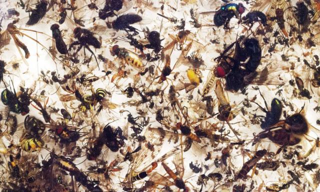 Côn trùng đang tuyệt chủng, kết cục tận thế cho hệ sinh thái - Ảnh 1.